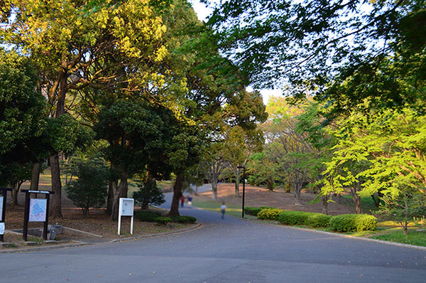 公園 代々木